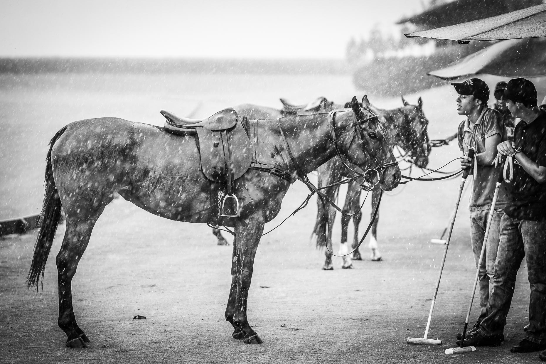 Polo Ponies in the rain in Brazil