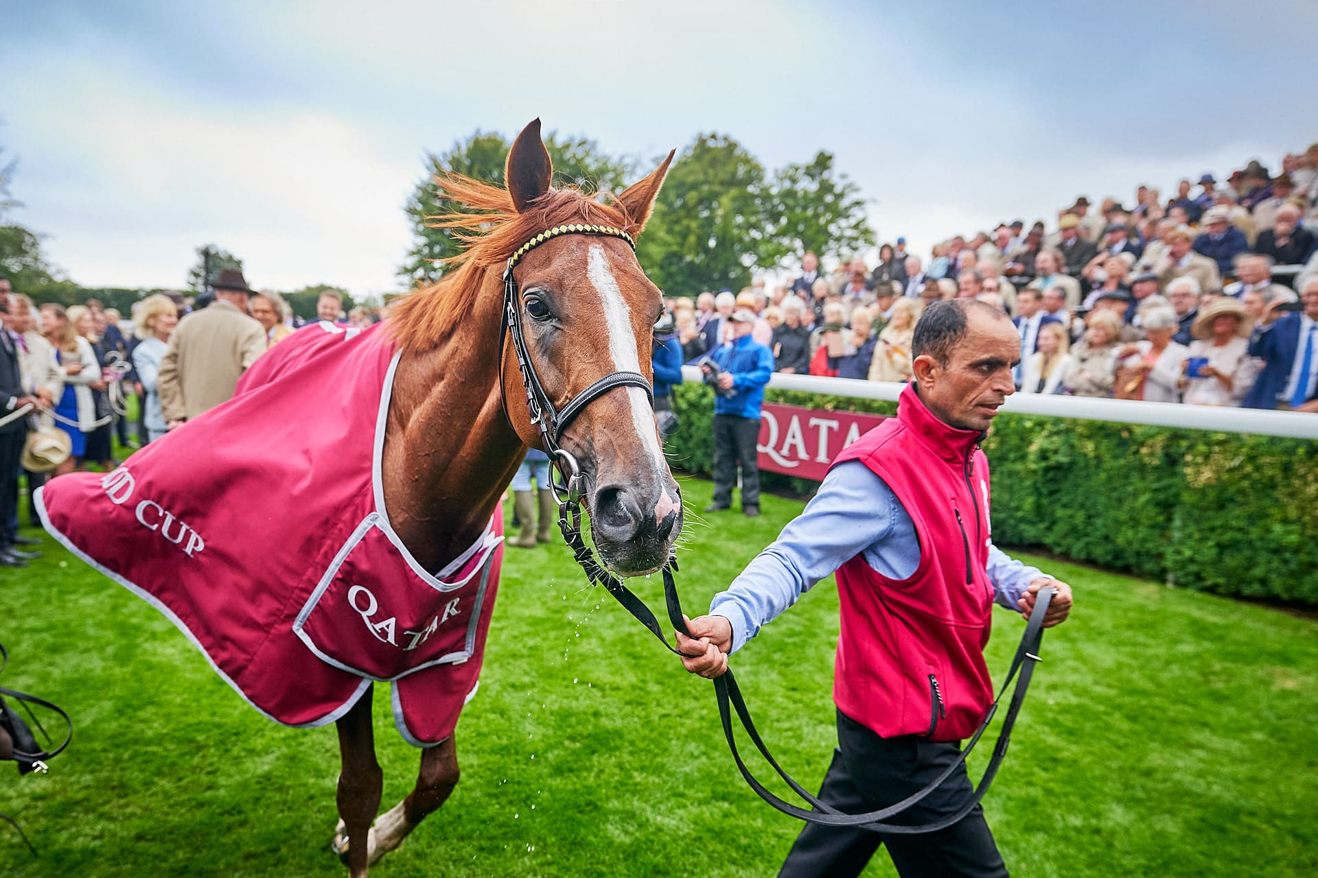 Dominic-James-Horse-Racing-QGF2019_DominicJames-01281-0074.JPG