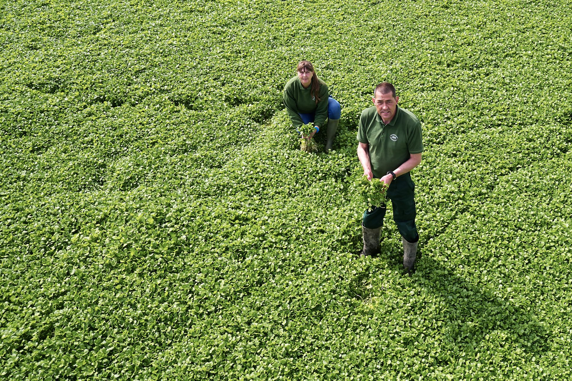 Waitrose Watercress Farm