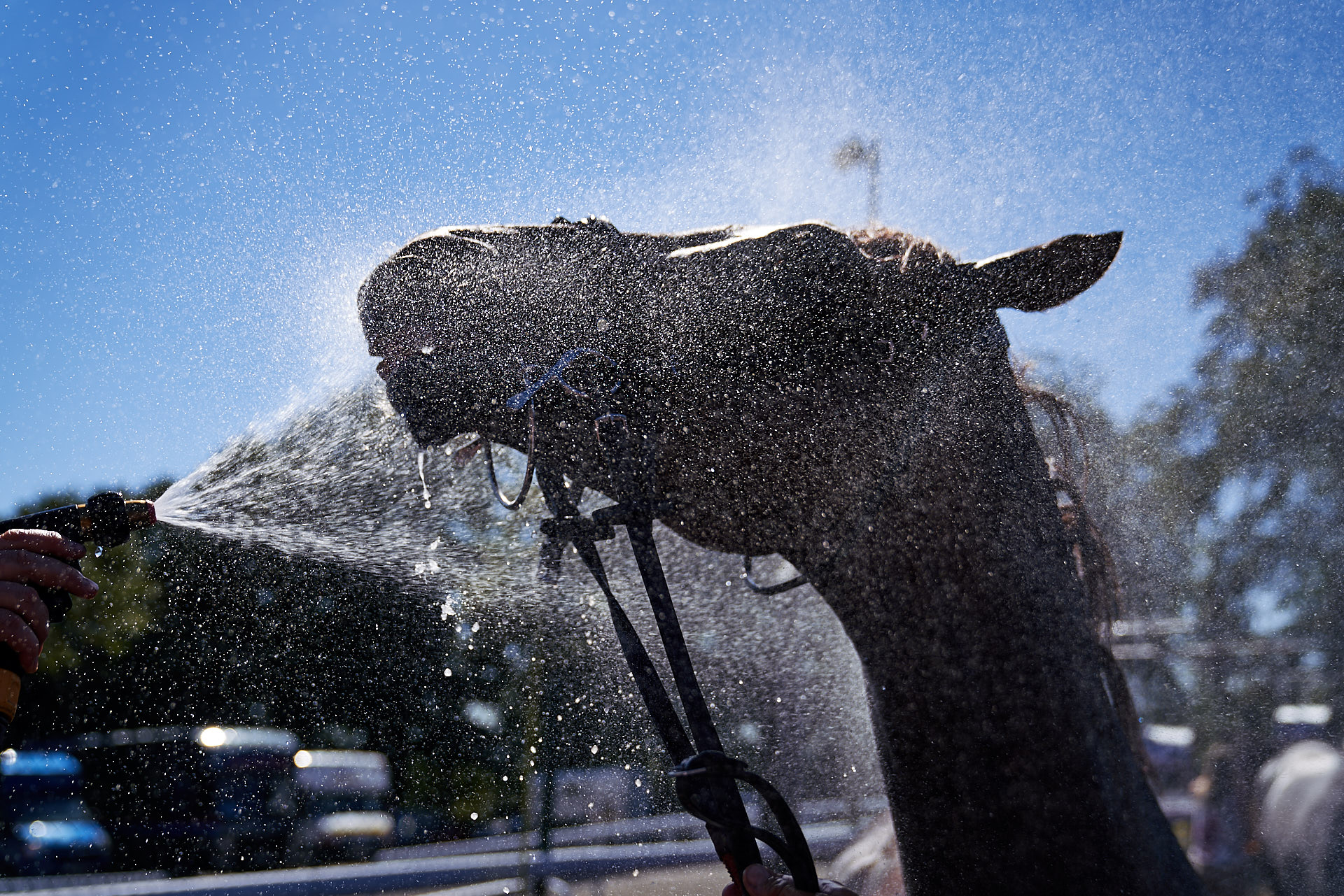 Horse is washed down after a race at the Qatar Goodwood Festival 2018